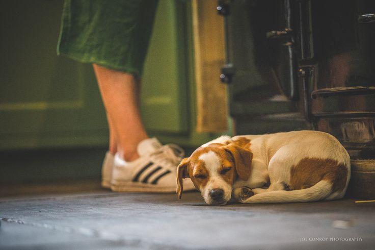 It's hard work being a puppy!