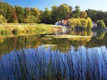 Cenad Forrest - Lunca Muresului Natural Park | Tourism Banat