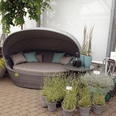 utendørs dagseng ~ DAYBED ~ kjempekul seng som kan pryde veranda/hage og en plass du kan nyte late feriedager. #staupslia #staupsliahagesenter #hage #hageliv #hageland #hagelandlevanger #daybed #hagemøbler #rotting #rottingmøbler #lavendel #strå #gress #stauder #interior #interiør #inspirasjon #gardendeco #gardeninspo