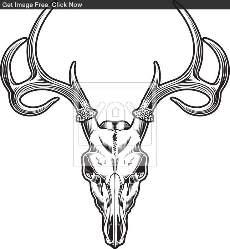 White Tail Deer Sckull Drawn: 22 Best Mylikes Images On Pinterest