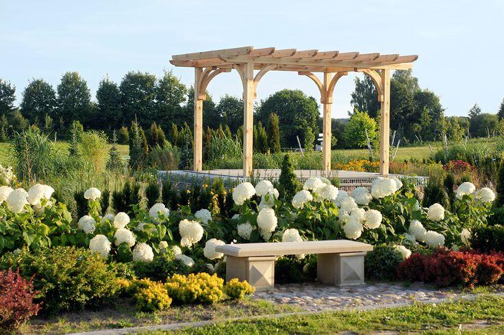 Modernistyczny ogród traw - Modernist garden grass