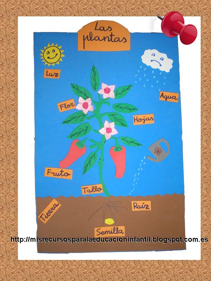 Recursos didácticos para la etapa de Educación Infantil: Las partes de una planta