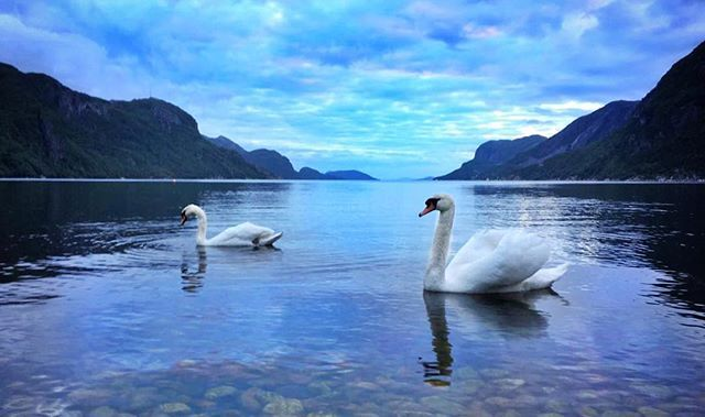 #mittfriluftsliv #utno #friluftsliv #nature #landscape #visitnorway #bestofscandinavia #bestofnorway #igscandinavia #mountains #mittnorge #mittnordnorge  #salmon #outdoor #bestnatureshot #norway #northofnorway #norges_fotografer #friluftsliv  #igscandinavia  #fish #liveterbestute #dreamchasersnorway #norge #kildentiletrikereliv #jaktfiskeogfriluftsliv #turistforeningen #forfriluftsfolk #fishing