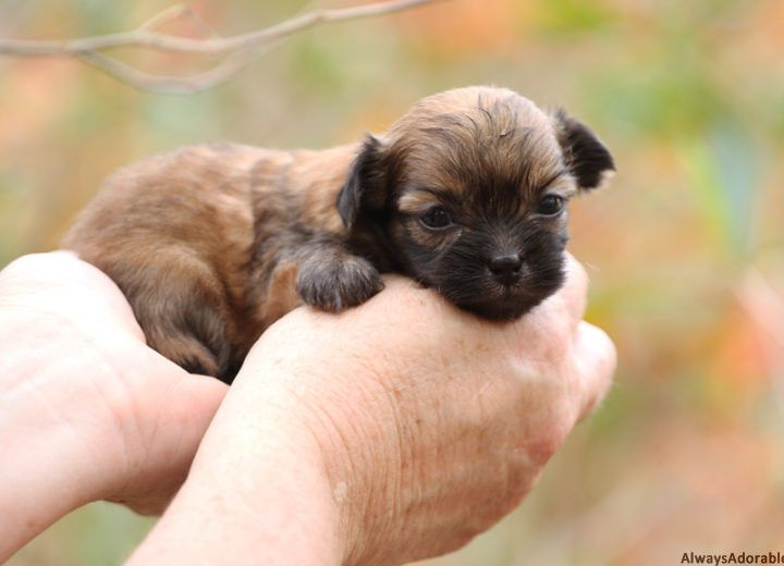 August 2016 Puppies From Puppy Nursery Puppies