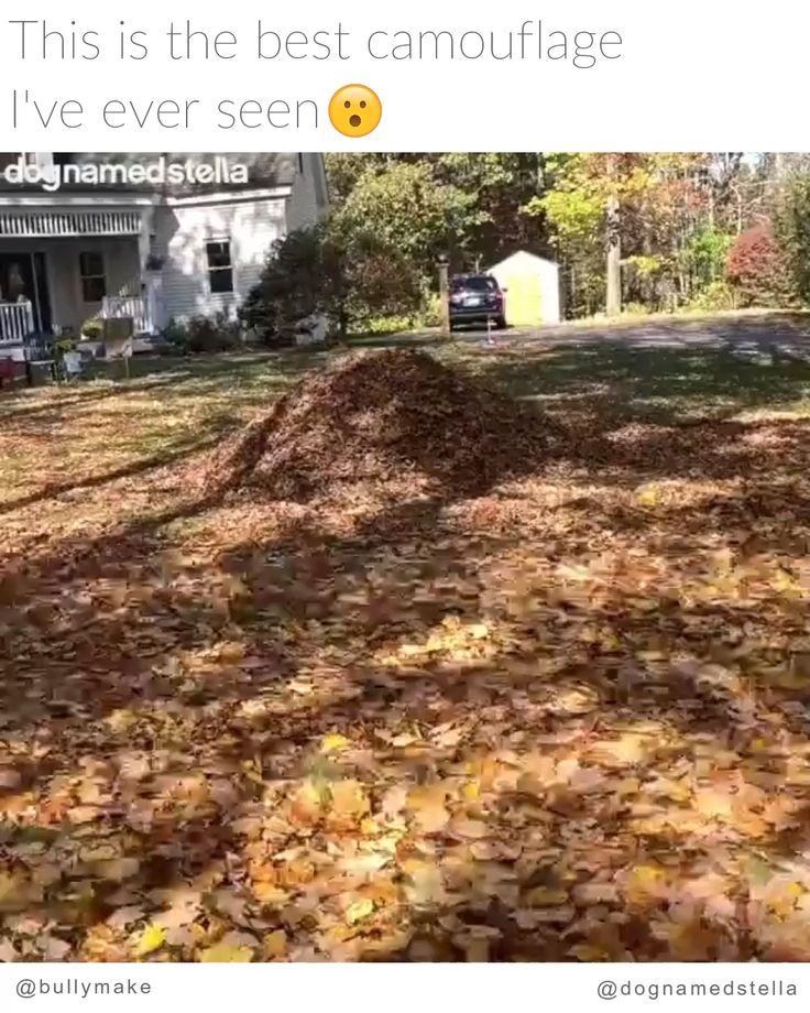 Golden Retriever ist eins mit den Blättern