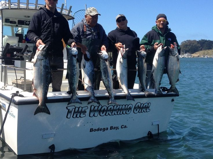 30 best norcal sportfishing adventures images on pinterest for Bodega bay fishing charters
