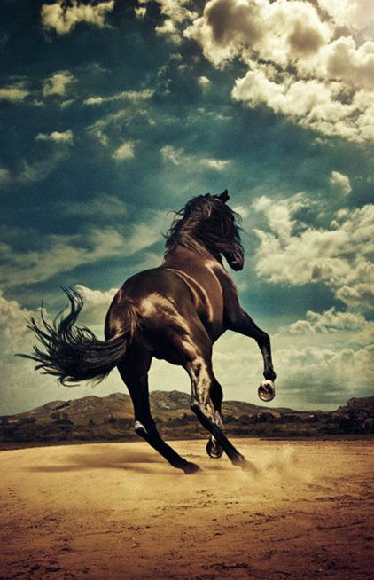 #Horse, photography by Kalle Gustafsson