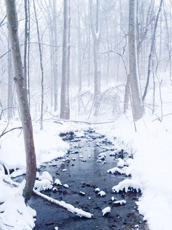 snow covered woods  | Jorge Suarez
