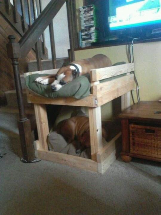 Good idea! Doggie bunk bed