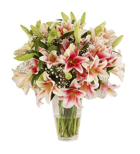 This arrangement contains the following flowers: 12 x Pink British Oriental Lilies 4 x White Gypsophila.