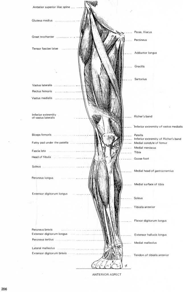The 377 best anatomy images on Pinterest | Anatomy drawing, Human ...