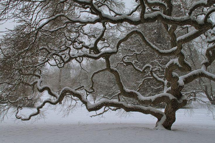 winter landscapes | Winter Tree - Nature Photography - Landscape Art Print - Snow ...