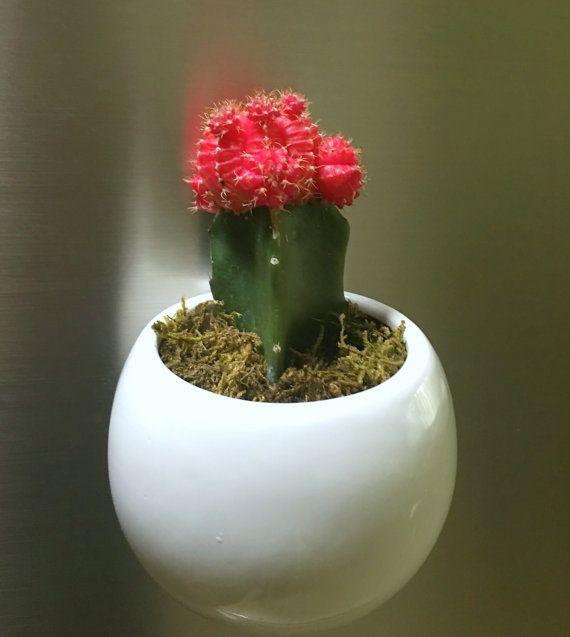 Modern Cactus Magnet, Refrigerator Cactus Garden, Red Cactus Moon, Cactus Magnet, Cactus Planter,  Grafted Cactus