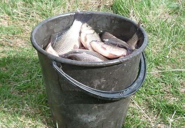 Как сохранить улов.   Мало поймать рыбу, надо уметь и сохранить ее, а сохранение рыбы начинается с того момента, как ее выловили. Всем известно, что рыба — нежный и скоропортящийся продукт. В жаркие летние дни выловленная рыба портится гораздо быстрее, чем в прохладную погоду. А доставить улов домой желательно если не в живом, то хотя бы в свежем виде. Некоторым рыболовам, вероятно, приходилось испытывать огорчения от привезенной с рыбалки домой испорченной рыбы. Ведь употребление в…