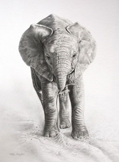 Top 25 ideas about Baby Elephant Drawing on Pinterest   Drawings ...