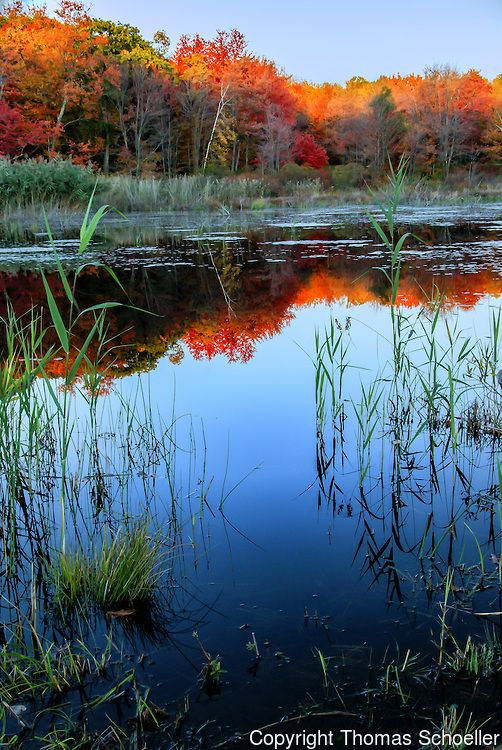 """ ""Autumns brilliant reflections on a Connecticut beaver pond in the scenic Litchfield Hills. This is part of the Wyantanock State Forest, a preserve that is fragmented in parcels between Kent, Warren, and Cornwall..."