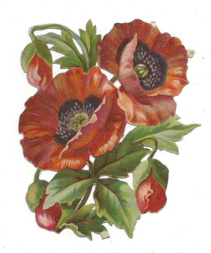 victorian die cut scrap Poppies in Flanders Field picclick.com
