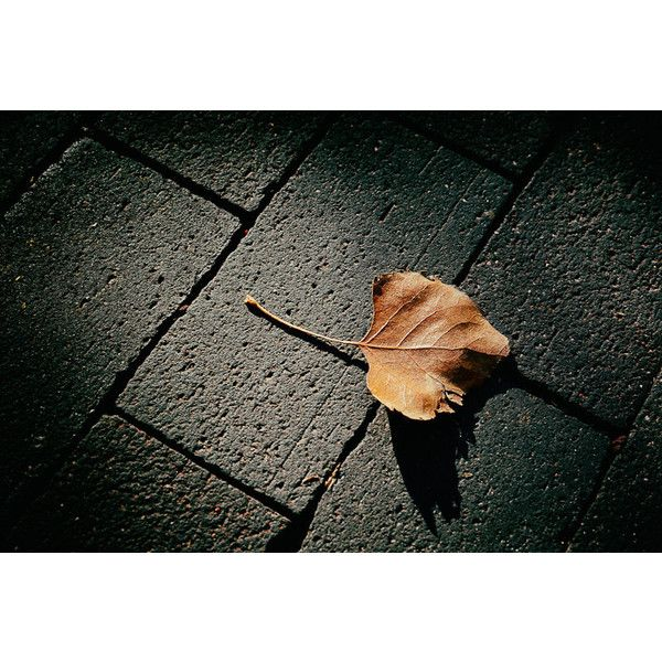 Landscape Photograph, Southwest, Cottonwood, Leaf Photo, Gold, Black,... (£31) ❤ liked on Polyvore featuring home, home decor, wall art, black home decor, black wall art, southwest home decor, leaf home decor and gold wall art