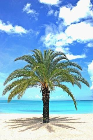 Palm Tree On Tropical Beach : Custom Wall Decals, Wall Decal Art, And Wall