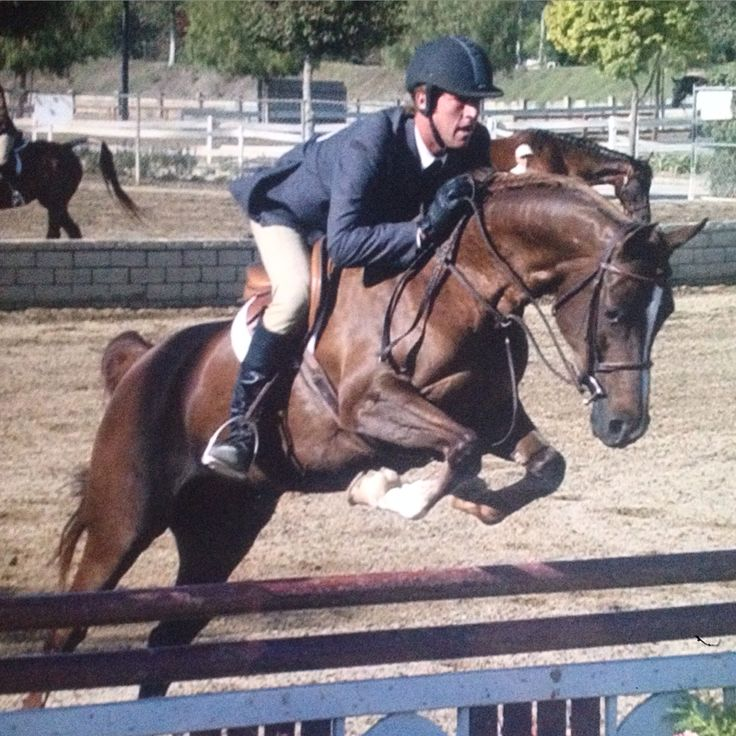 89 best Horse Breeds That Do Jumping! images on Pinterest ...