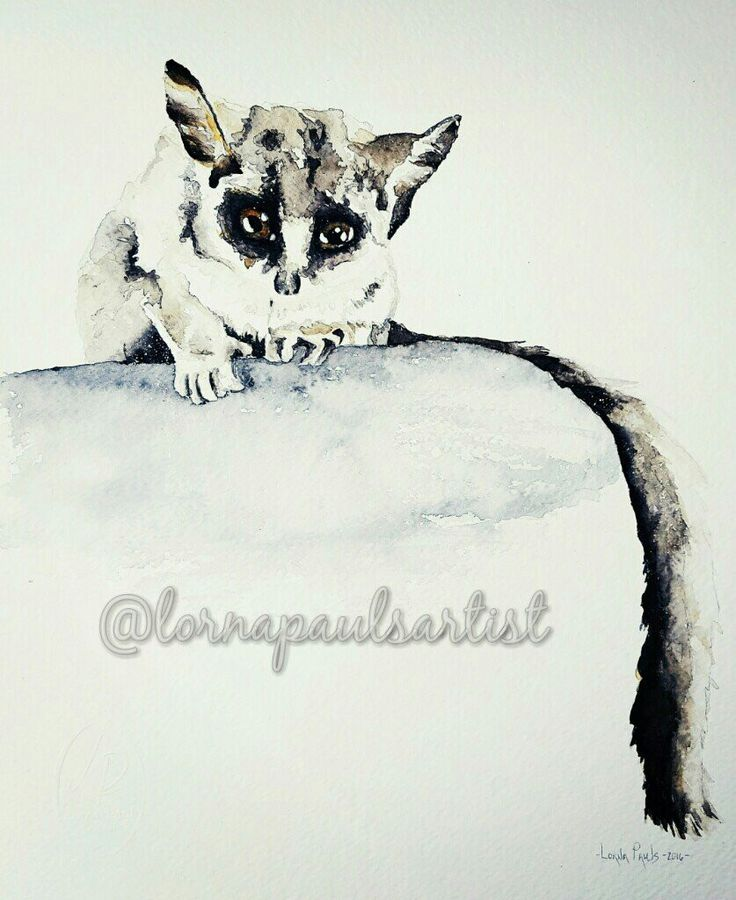 African Bushbaby  Artist Lorna Pauls Done December 2016 640g Fabrianno