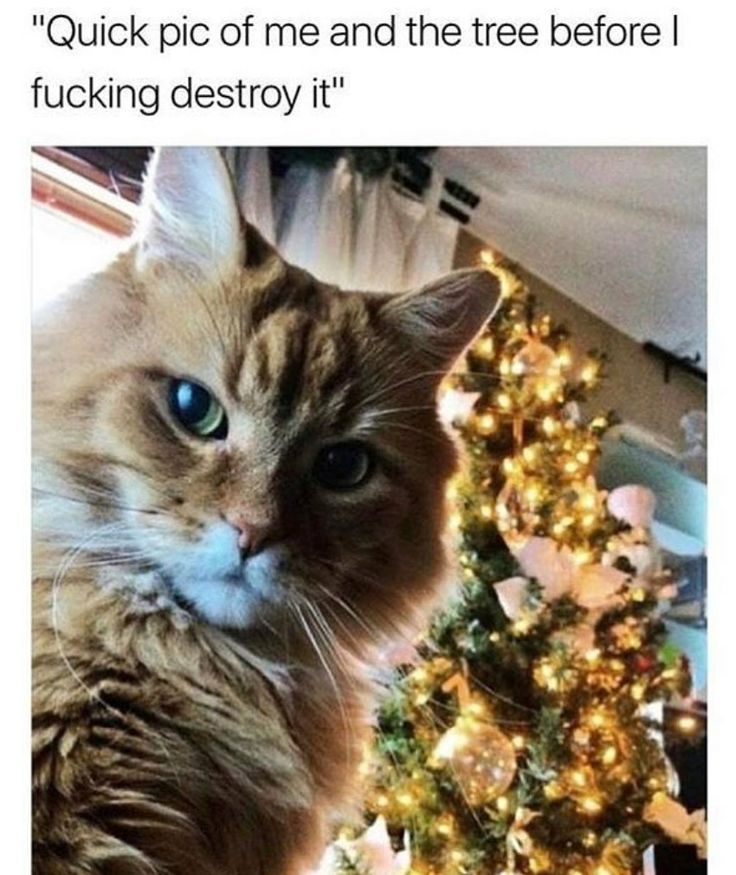 Best Cats Are Assholes Ideas On Pinterest Logic Gag Face - 31 photos that prove cats are actually assholes