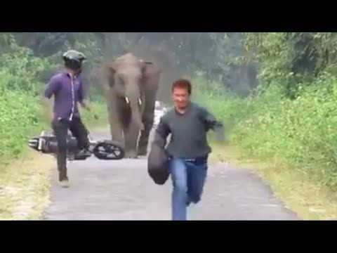 Wild elephant attack public,cars bikes and every thing in india