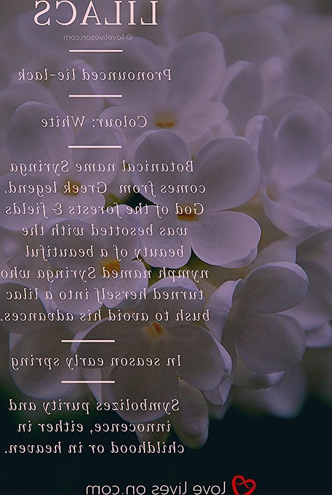 White Lilac Meaning In 2020 With Images Funeral Flower Arrangements Sympathy Bouquets Funeral Flowers
