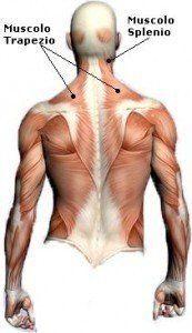 muscolo-trapezio-cervicale-collo-spalla-scritto