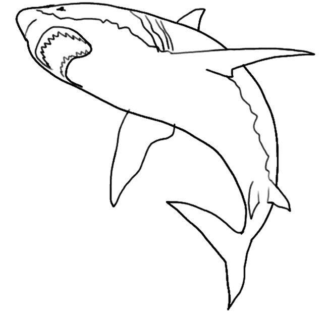 Free Premium Templates Shark Coloring Pages Animal Templates Animal Art