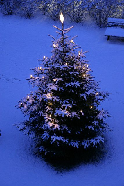 There is something about a tree...lit up...outside...with the snow falling gently....takes your breath away...how beautiful!