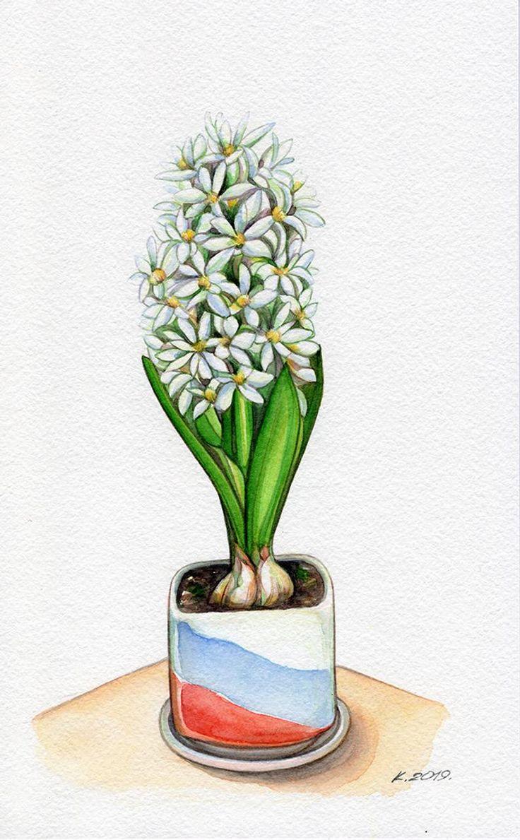 Hyacinth flower bulb red blue green yellow white etsy