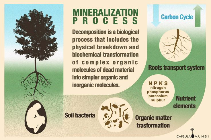 The biological cycle of transformation is the same for all living beings. It is time for humans to realize our integrated part in nature.