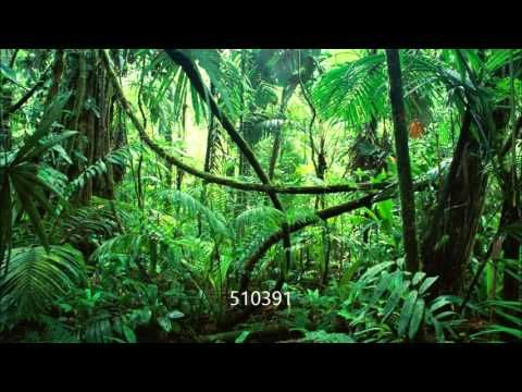 [BONUS] Track #17: Sounds from Jungle - YouTube