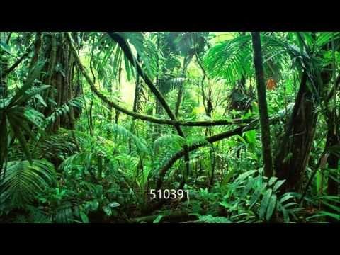 [BONUS] Track #17: Sounds from Jungle - YouTube