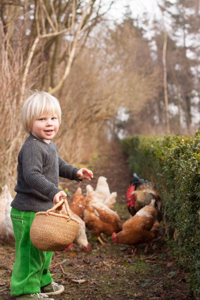 Barn fodrer høns. Child feeding chickens.