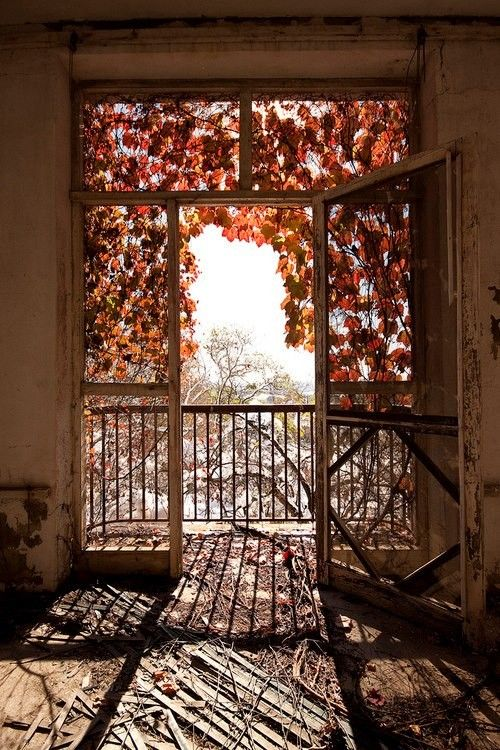 autumn, window #laylagrayce #suryarugs