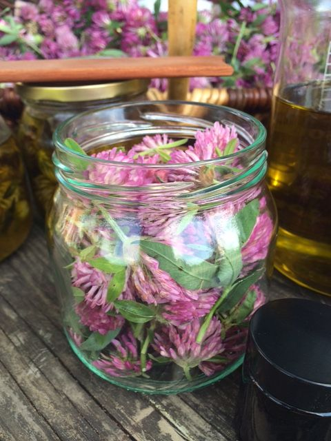 Lena Losciale Skincare. In the making. Red Clover balm. Sweden.