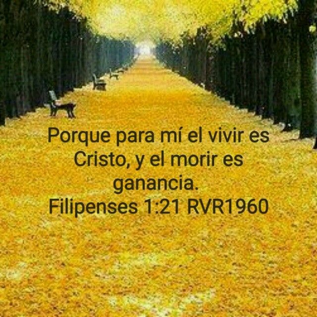 Pin By Mujer Extraordinaria On Biblia Country Roads Christian Greatful