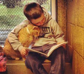 Crianças leem para gatos