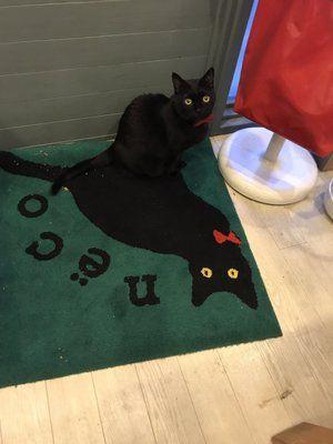 「近所の猫がいる雑貨屋さんの幽体離脱〜!がとても可愛い」のYahoo!検索(リアルタイム) - Twitter(ツイッター)、Facebookをリアルタイム検索