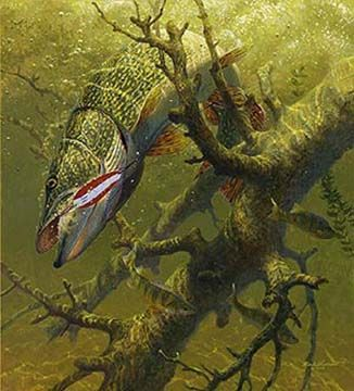Mark susinno hung up northern pike angling fly for Fly fishing art