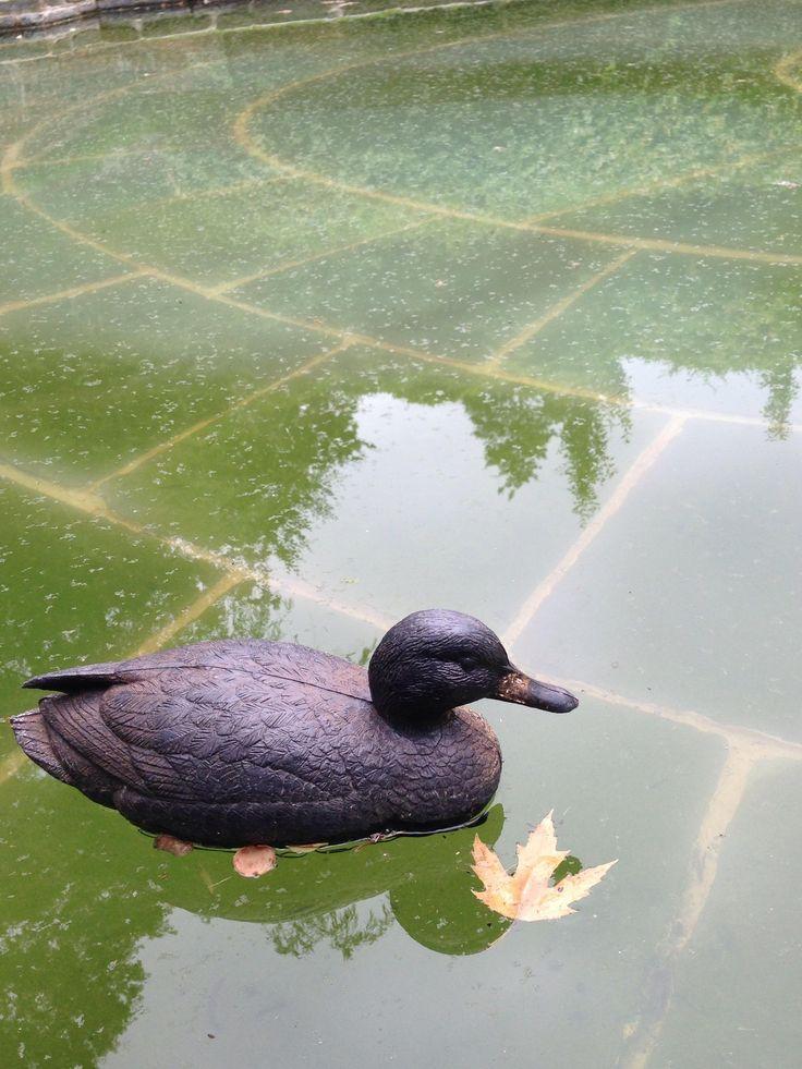 25 Best Ideas About Plastic Pond On Pinterest Pond