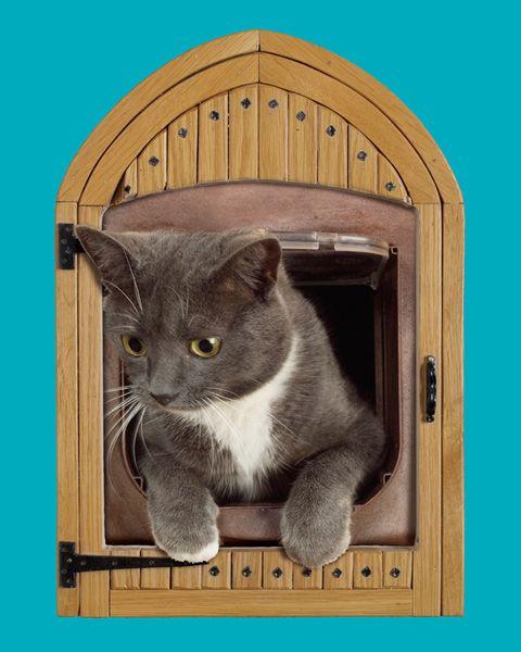 Cat flap trim | Creative | Cats, Crazy cats, Cat design