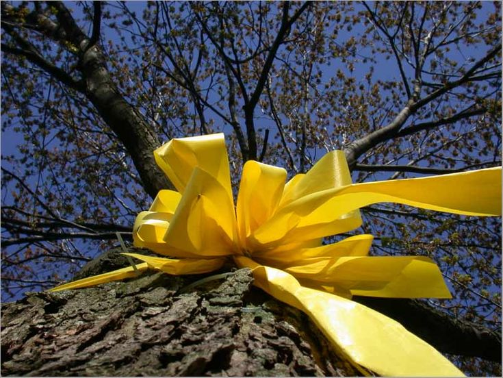 "Military tradition: ""Tie a Yellow Ribbon Round The Old Oak Tree...If You still love Me..."" Memories growing up canvassing the base with yellow ribbons around the trees when the squadron was coming home from deployment."