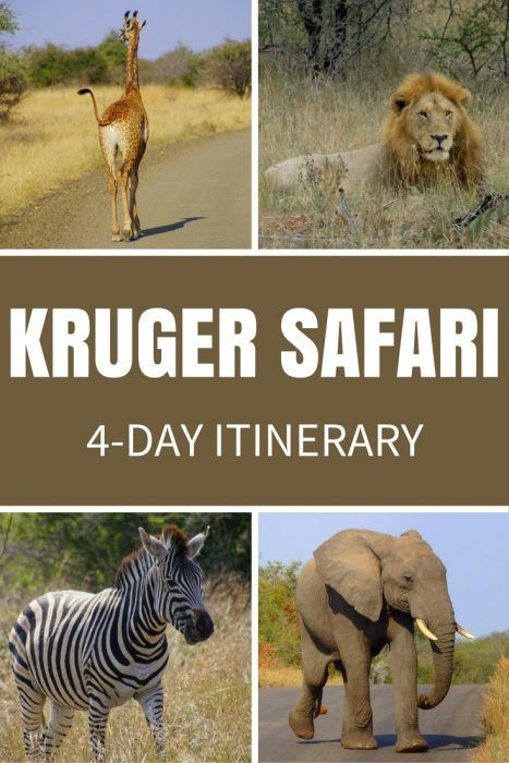SOUTH AFRICA TRAVEL: Safari in Kruger National Park, South Africa! Here is my 4-day itinerary for budget travellers who want to go on a Kruger safari and not break the bank.
