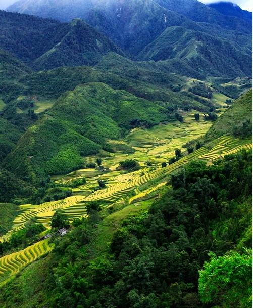 Landscape in Sa Pa