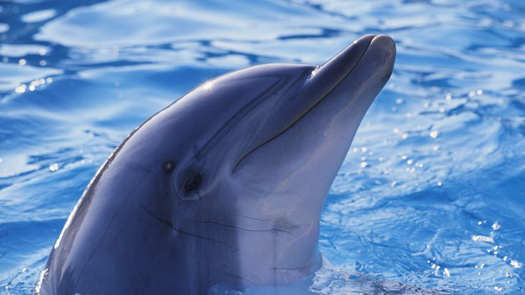dolphin hd | posts pink dolphin hd wallpaper sea wallpapers hd five little foxes hd ...