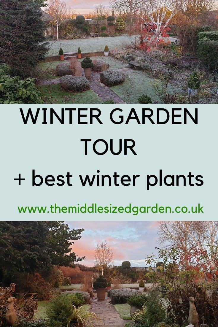 Really Easy Winter Garden Plants They Ll Add Structure And Style
