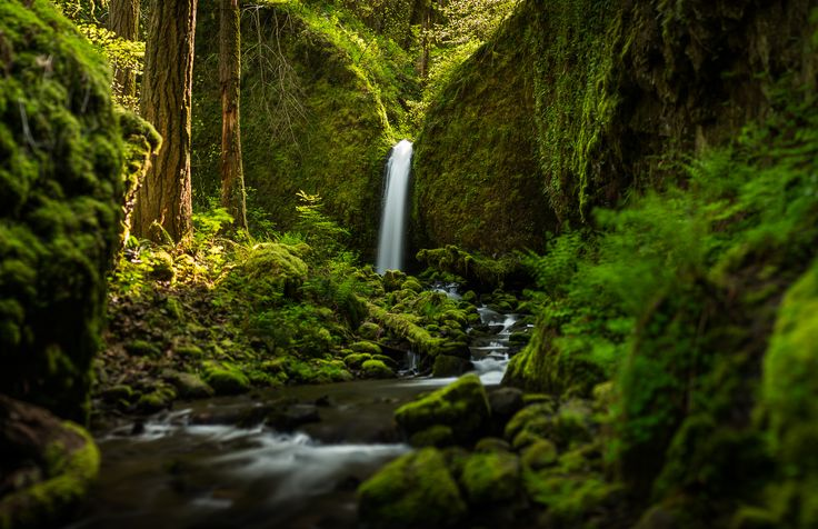 Oregon - wallpaper. - Wallpaper Zone